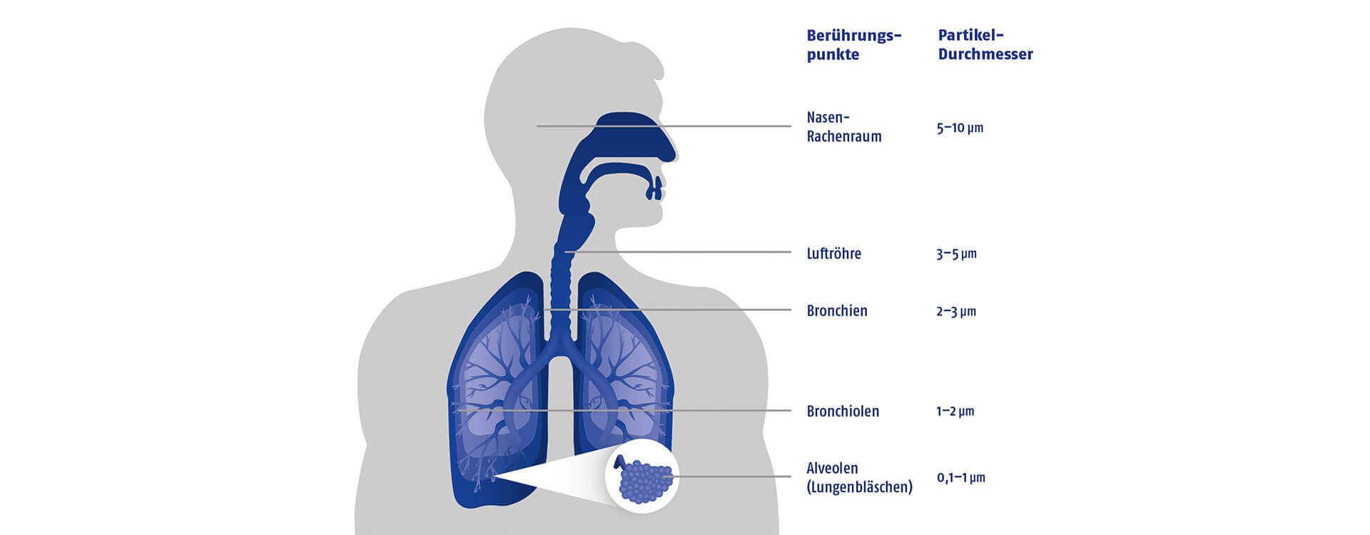 Filter – gut auch für das olfaktorische System
